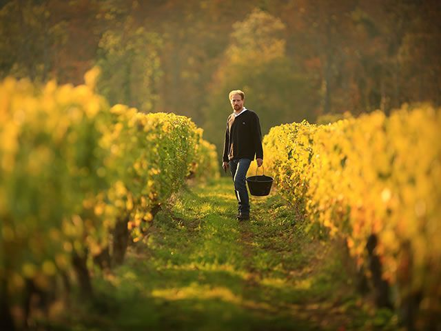 Jean de Saint-Venant in the vineyards of Valmer © Léonard de Serres